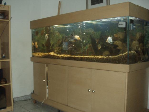 Aquário de Peixe na Decoração - Sala e Modelos | Decoração