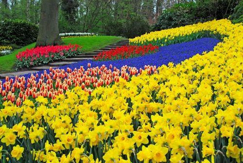 flores coloridas jardim:Jardins com Flores Coloridas – Rosas e Violetas